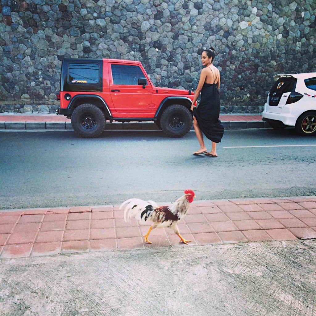 KatrinaTaib chicken