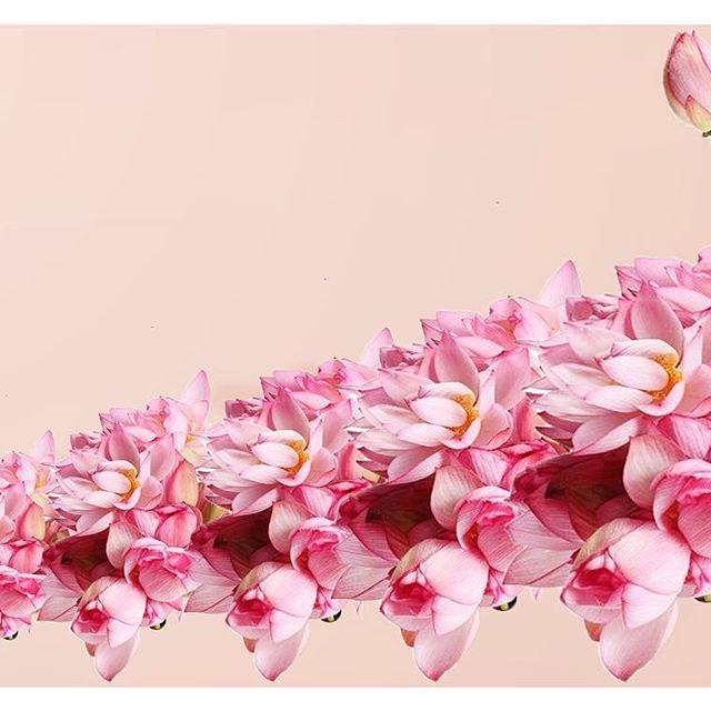 """The """"Naya"""" lotus symbolic of #prosperity #rebirth #ferrility"""