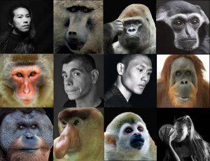 primates, rainforest fringe festival