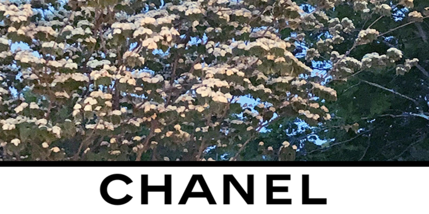 LIVESTREAM: Chanel's Autumn/Winter '20